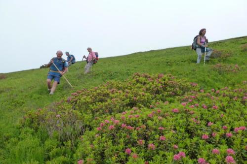 20-descente dans les rododendrons au-dessus du col des Cos